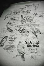 caligrafia y lettering