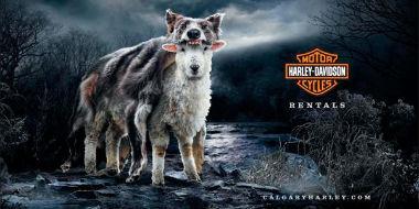 La publicidad gráfica de Harley Davidson (3/6)